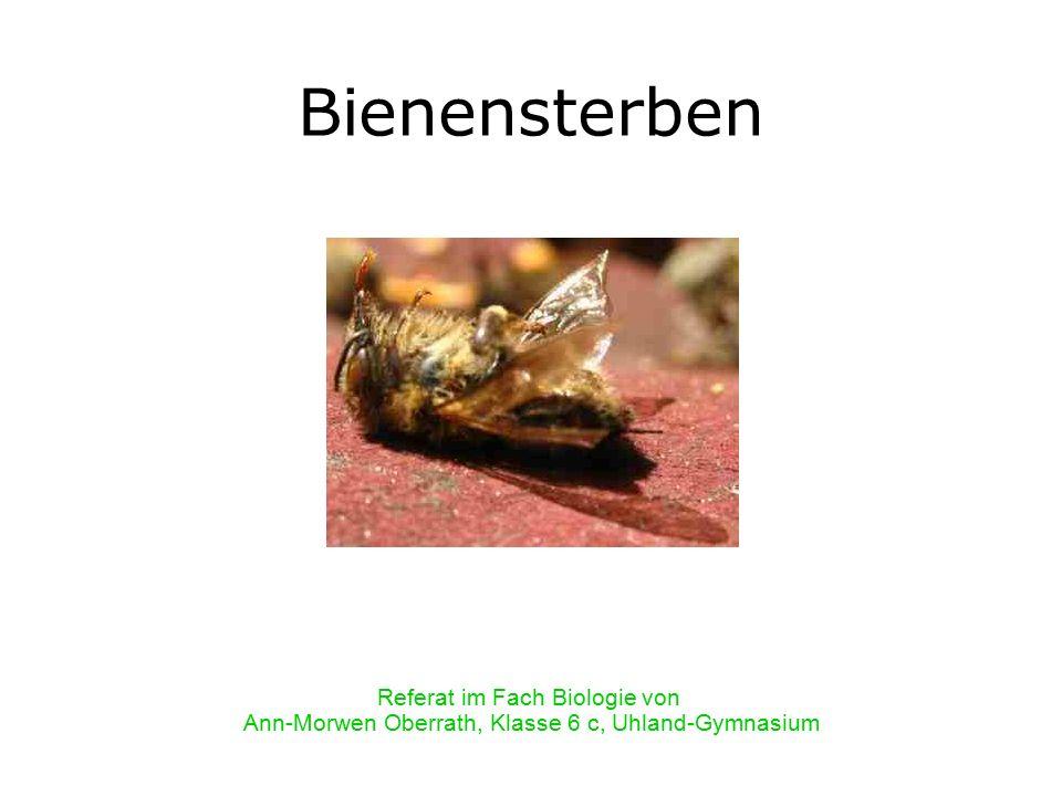 Bienensterben Referat im Fach Biologie von Ann-Morwen Oberrath, Klasse 6 c, Uhland-Gymnasium