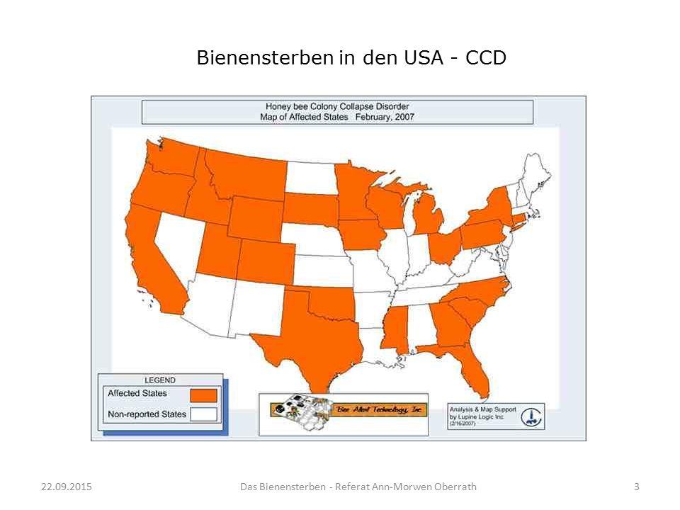 22.09.2015Das Bienensterben - Referat Ann-Morwen Oberrath3 Bienensterben in den USA - CCD