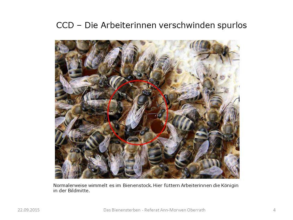 22.09.20154Das Bienensterben - Referat Ann-Morwen Oberrath Normalerweise wimmelt es im Bienenstock. Hier füttern Arbeiterinnen die Königin in der Bild