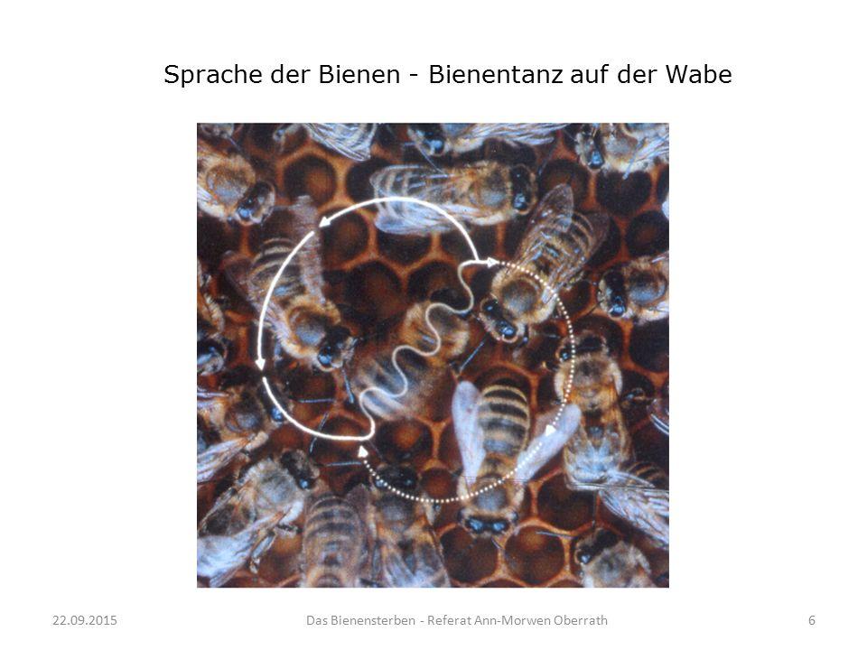 22.09.2015Das Bienensterben - Referat Ann-Morwen Oberrath6 Sprache der Bienen - Bienentanz auf der Wabe