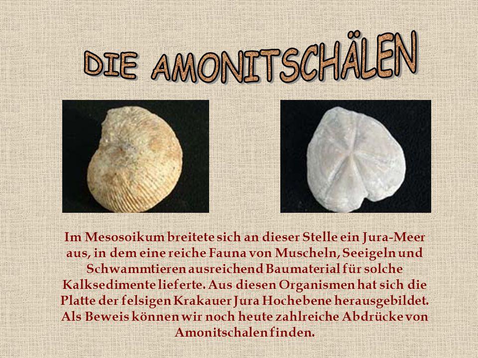 Im Mesosoikum breitete sich an dieser Stelle ein Jura-Meer aus, in dem eine reiche Fauna von Muscheln, Seeigeln und Schwammtieren ausreichend Baumaterial für solche Kalksedimente lieferte.
