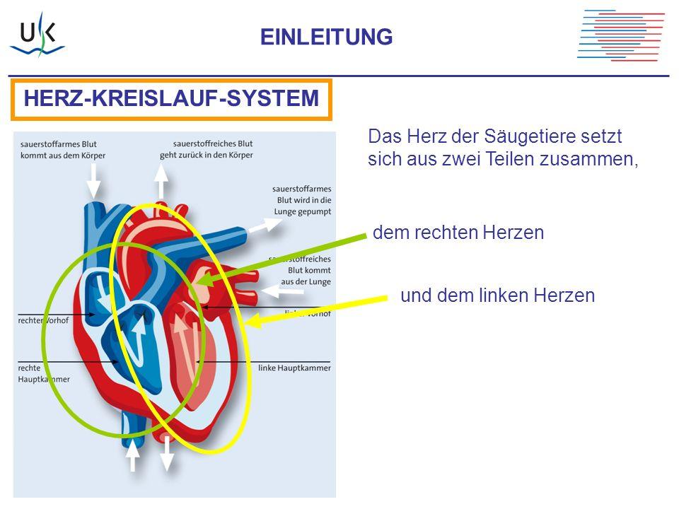 """Die rechte Herzhälfte pumpt das Blut durch den Lungenkreislauf (""""kleiner Kreislauf )."""