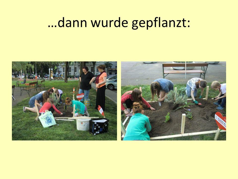 …dann wurde gepflanzt: