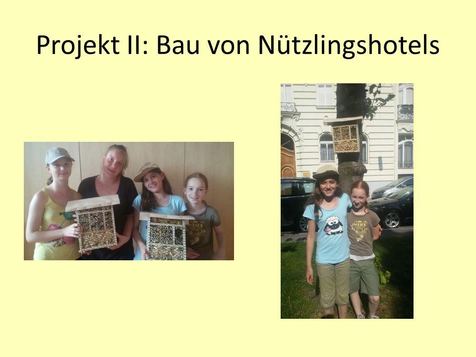 Projekt II: Bau von Nützlingshotels