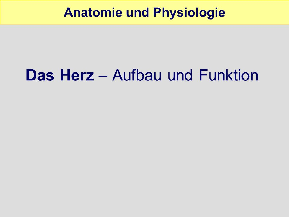 Hard facts Anatomie und Physiologie Faustgroßer Hohlmuskel Pumpe für den menschlichen Kreislauf Schlägt 60 - 80 mal pro Minute Links unter dem Brustbein, zwischen der 4.