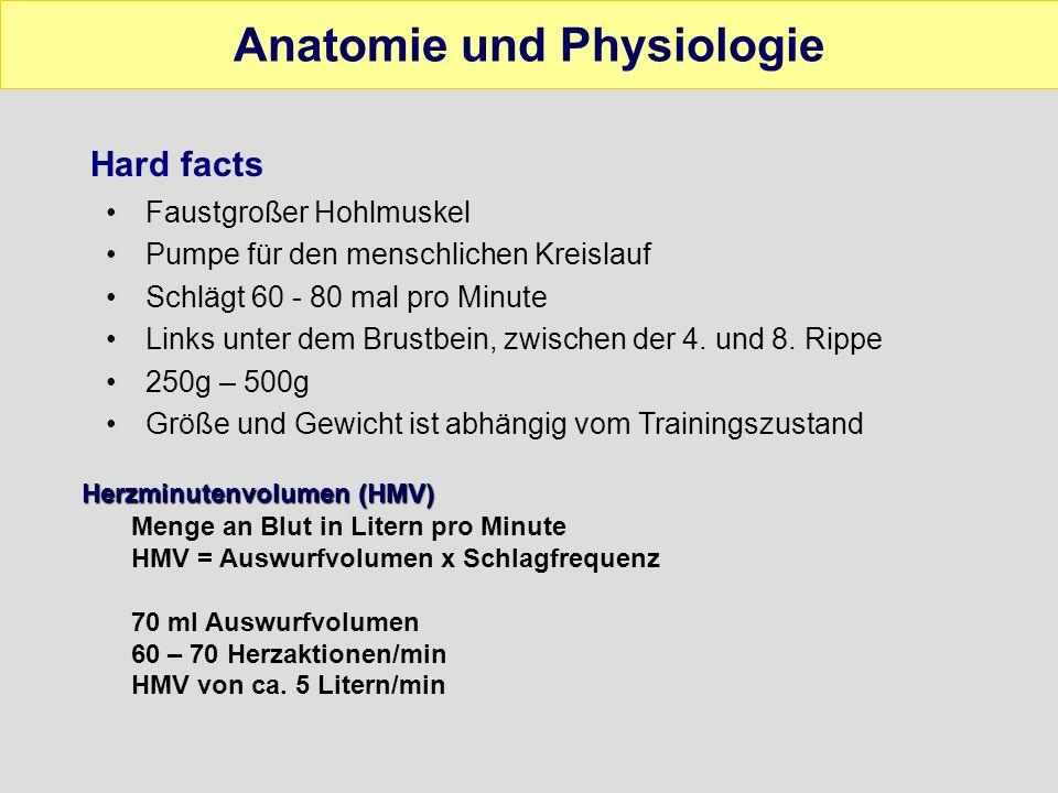 Anatomie und Physiologie Bau der Herzwand Herzinnenhaut (Endokard) Herzmuskel (Myokard) Außenhaut (Epikard) Herzbeutel (Perikard)