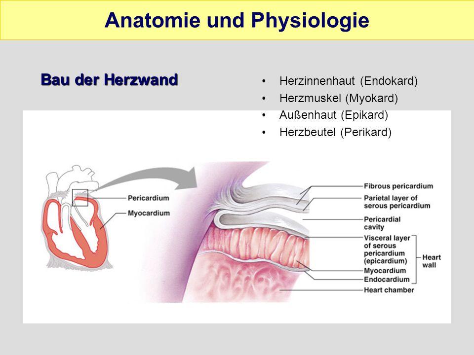 Herzinnenräume Vier Abschnitte –Rechter und linker Vorhof –Rechte und linke Herzkammer rechte und linke Seite wird durch die Herzscheidewand (Septum) getrennt Animation Anatomie und Physiologie