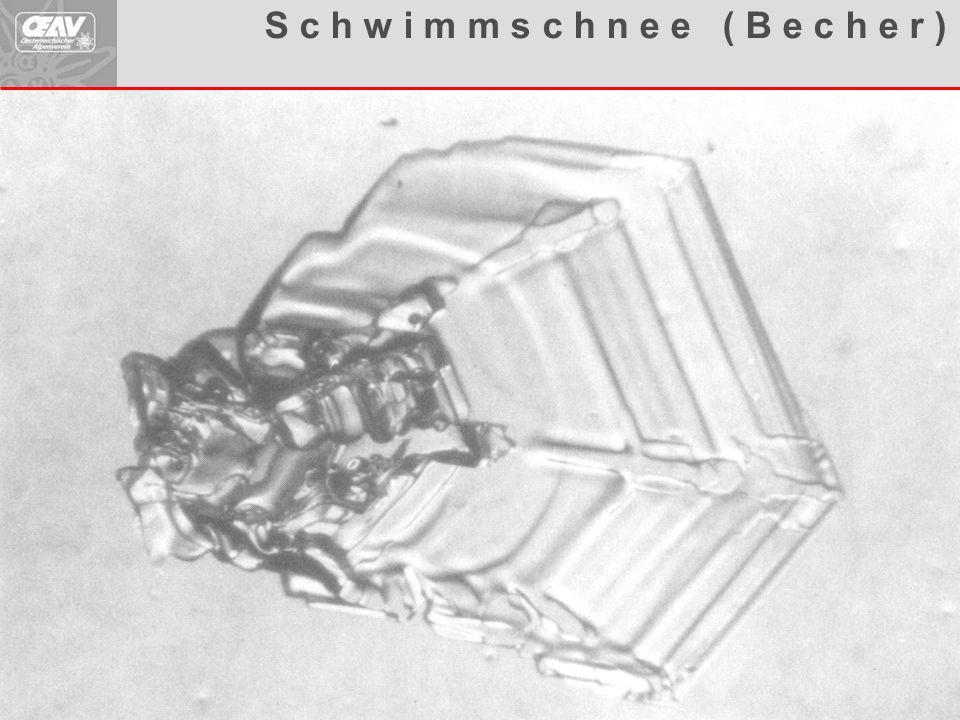 Aufbauende Metamorphose S c h w i m m s c h n e e ( B e c h e r )