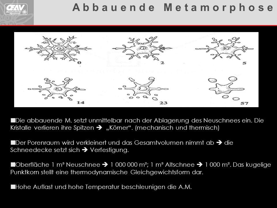 """Lawinenhandbuch Die abbauende M. setzt unmittelbar nach der Ablagerung des Neuschnees ein. Die Kristalle verlieren ihre Spitzen  """"Körner"""". (mechanisc"""