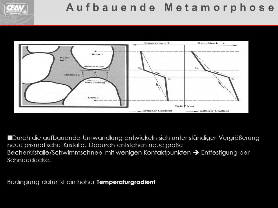 Lawinenhandbuch Durch die aufbauende Umwandlung entwickeln sich unter ständiger Vergrößerung neue prismatische Kristalle. Dadurch entstehen neue große