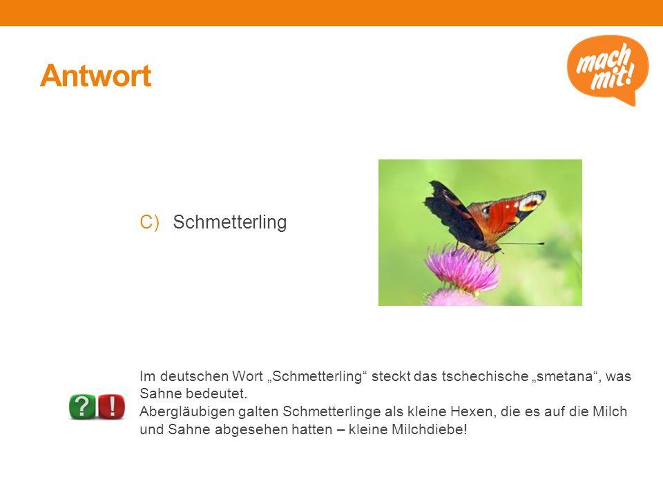 """Antwort C)Schmetterling Im deutschen Wort """"Schmetterling"""" steckt das tschechische """"smetana"""", was Sahne bedeutet. Abergläubigen galten Schmetterlinge a"""
