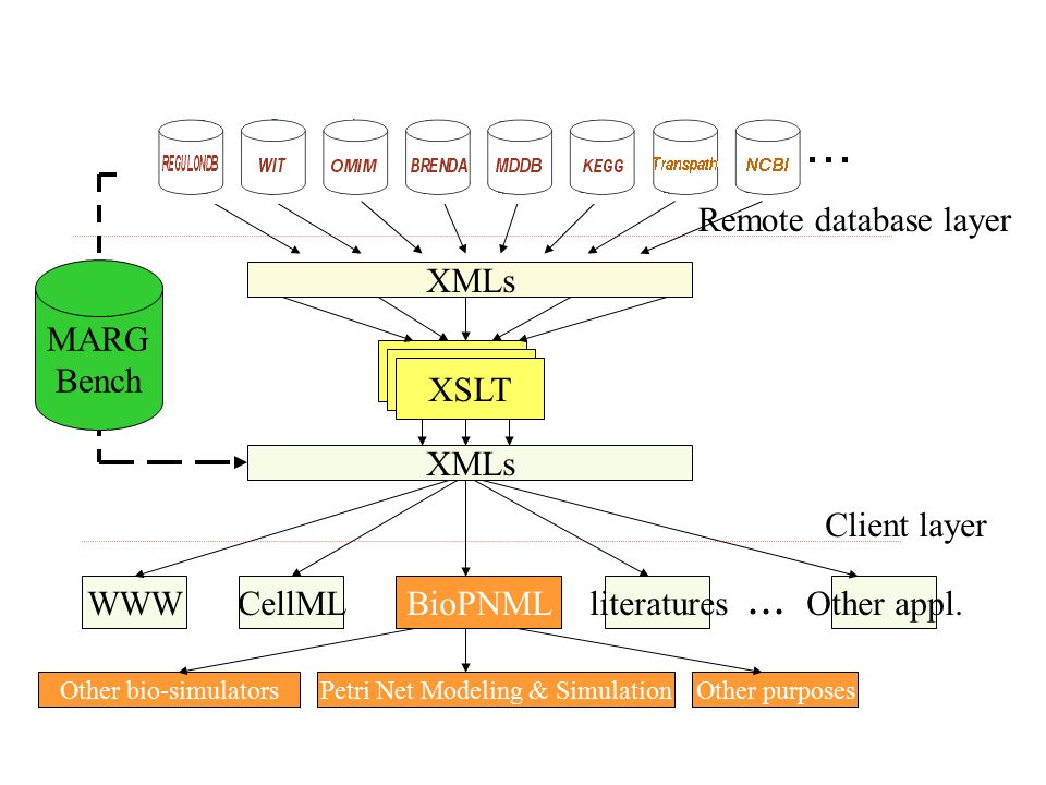 XMLs XSLT Other appl.literaturesCellMLWWW... Remote database layer Client layer XMLs Petri Net Modeling & SimulationOther bio-simulatorsOther purposes
