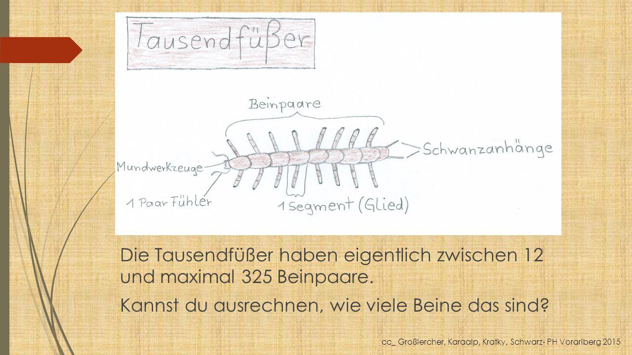 Die Tausendfüßer haben eigentlich zwischen 12 und maximal 325 Beinpaare. Kannst du ausrechnen, wie viele Beine das sind? cc_ Großlercher, Karaalp, Kra