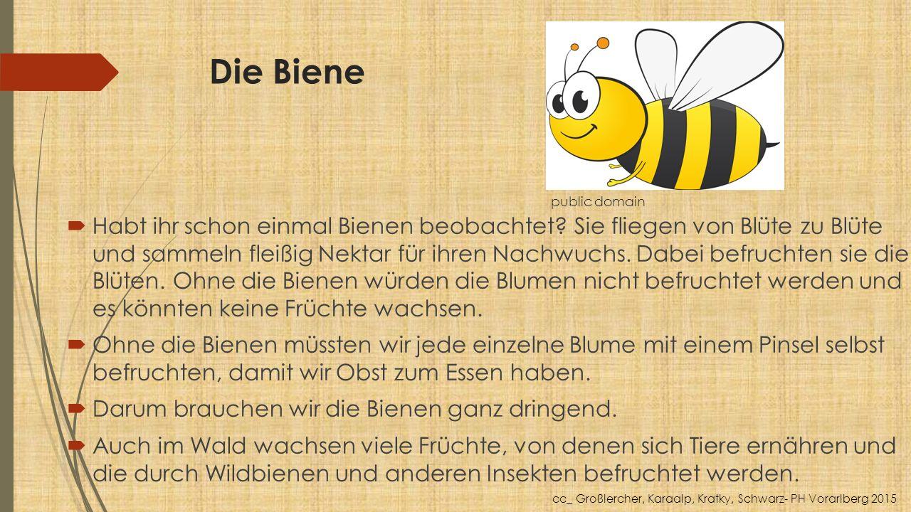 Die Biene public domain  Habt ihr schon einmal Bienen beobachtet? Sie fliegen von Blüte zu Blüte und sammeln fleißig Nektar für ihren Nachwuchs. Dabe