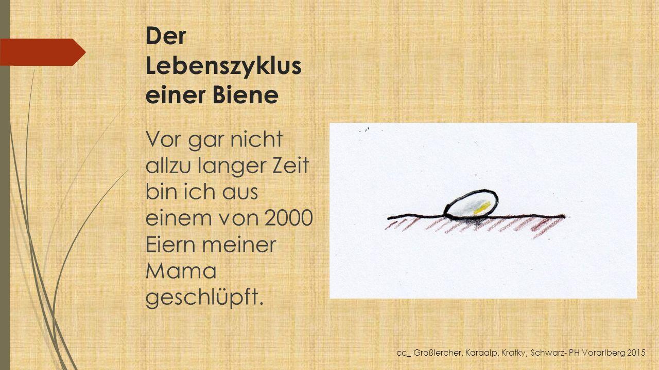 Der Lebenszyklus einer Biene Vor gar nicht allzu langer Zeit bin ich aus einem von 2000 Eiern meiner Mama geschlüpft. cc_ Großlercher, Karaalp, Kratky