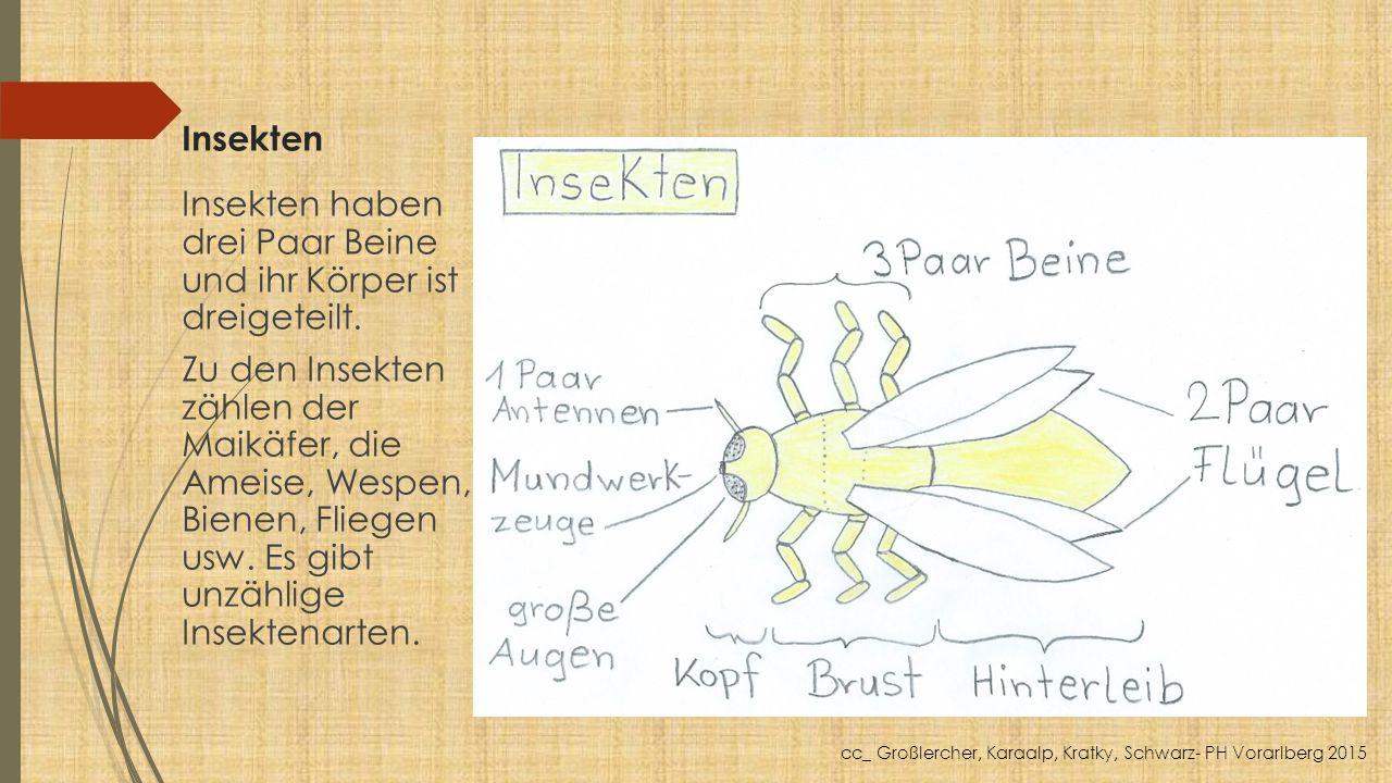 Insekten Insekten haben drei Paar Beine und ihr Körper ist dreigeteilt. Zu den Insekten zählen der Maikäfer, die Ameise, Wespen, Bienen, Fliegen usw.