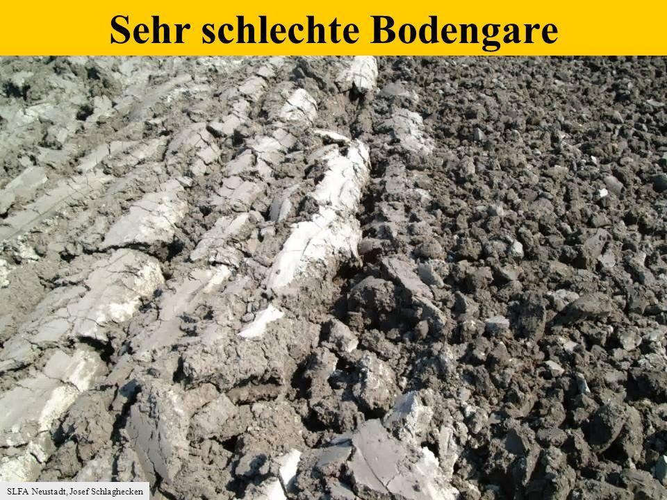 SLFA Neustadt, Josef Schlaghecken Sehr schlechte Bodengare