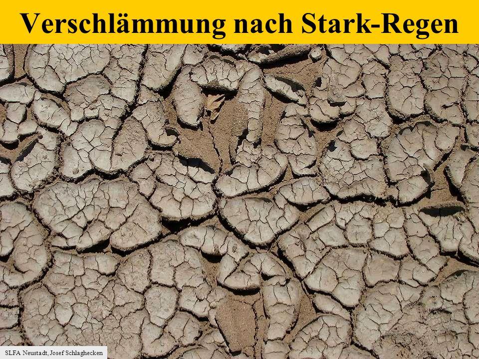 SLFA Neustadt, Josef Schlaghecken Verschlämmung nach Stark-Regen