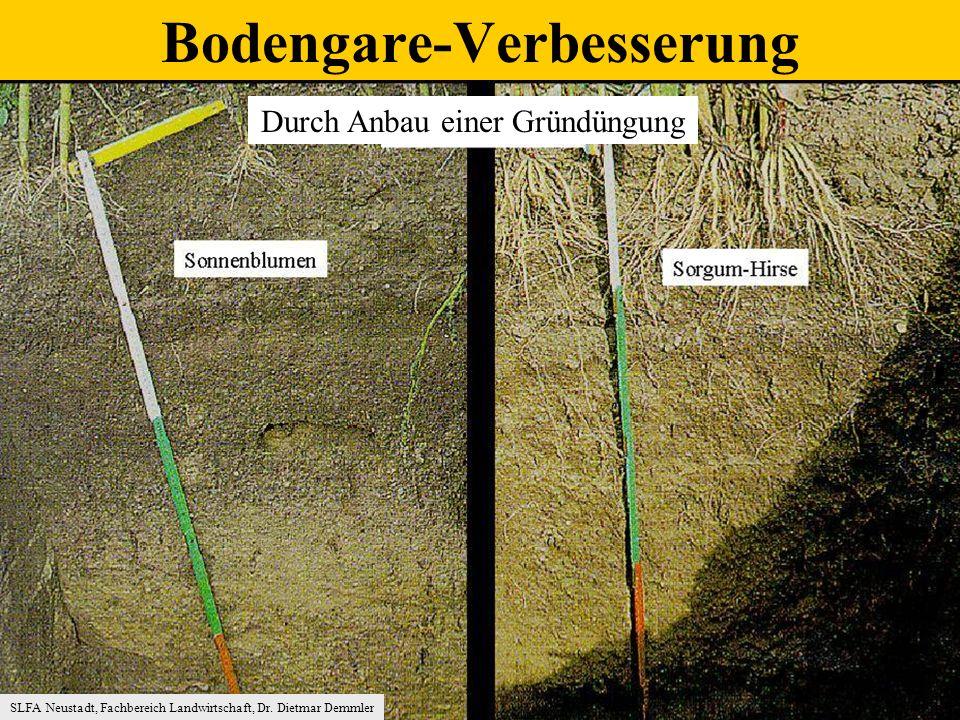 Durch Anbau einer Gründüngung SLFA Neustadt, Fachbereich Landwirtschaft, Dr.