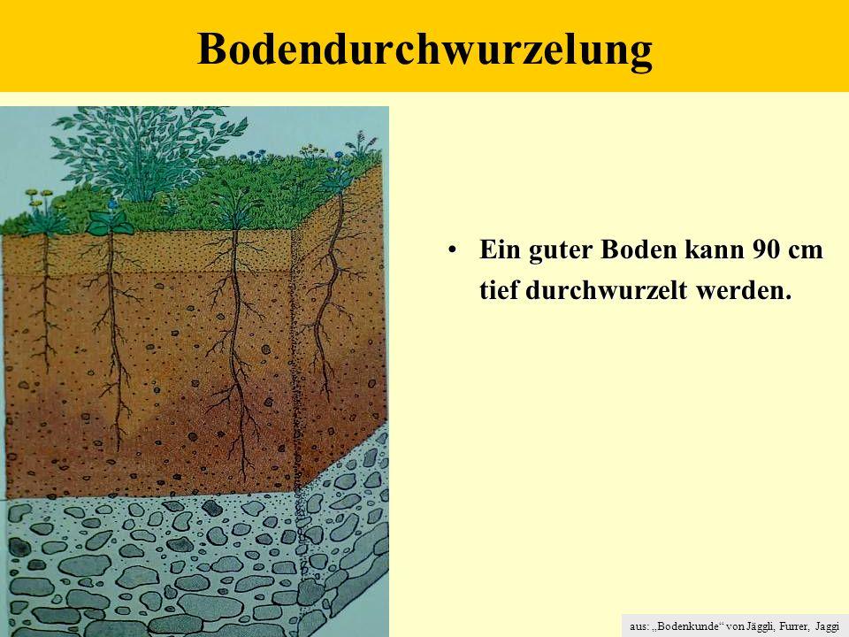 """aus: """"Bodenkunde von Jäggli, Furrer, Jaggi Bodendurchwurzelung Ein guter Boden kann 90 cmEin guter Boden kann 90 cm tief durchwurzelt werden."""