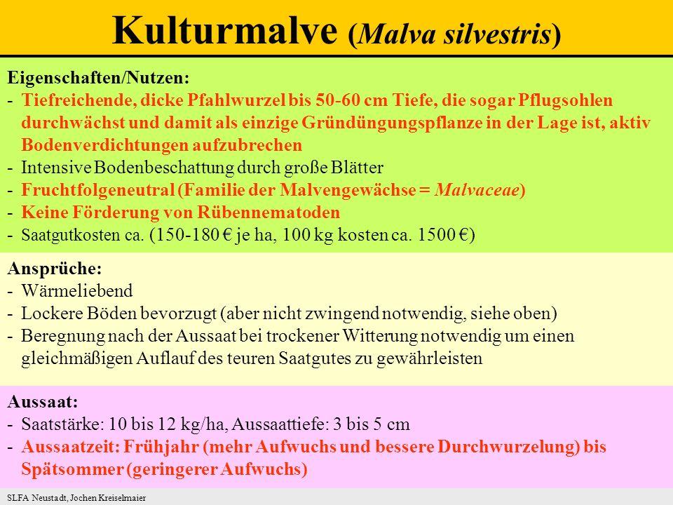Eigenschaften/Nutzen: -Tiefreichende, dicke Pfahlwurzel bis 50-60 cm Tiefe, die sogar Pflugsohlen durchwächst und damit als einzige Gründüngungspflanze in der Lage ist, aktiv Bodenverdichtungen aufzubrechen -Intensive Bodenbeschattung durch große Blätter -Fruchtfolgeneutral (Familie der Malvengewächse = Malvaceae) -Keine Förderung von Rübennematoden - Saatgutkosten ca.