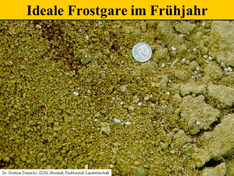 Ideale Frostgare im Frühjahr