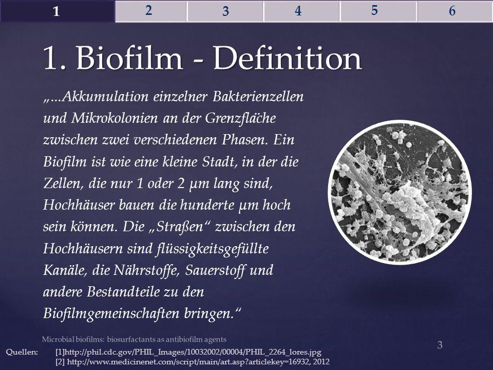"""""""...Akkumulation einzelner Bakterienzellen und Mikrokolonien an der Grenzfla ̈ che zwischen zwei verschiedenen Phasen. Ein Biofilm ist wie eine kleine"""