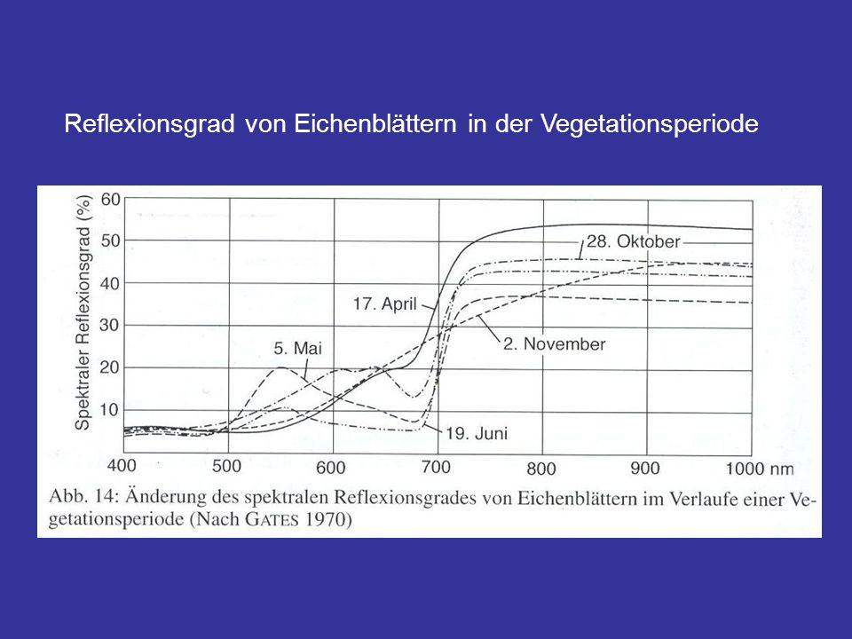 Reflexionsgrad von Eichenblättern in der Vegetationsperiode