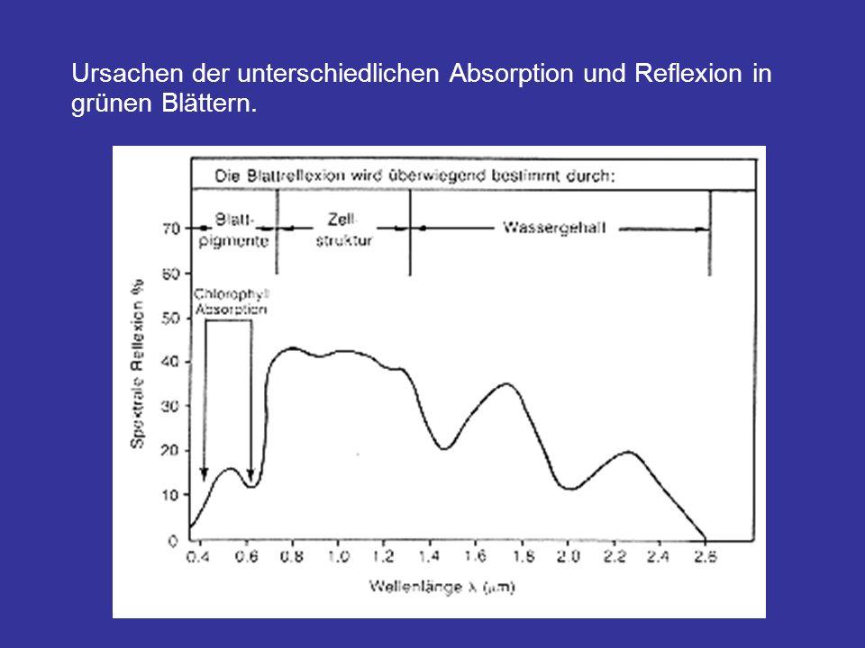 Ursachen der unterschiedlichen Absorption und Reflexion in grünen Blättern.