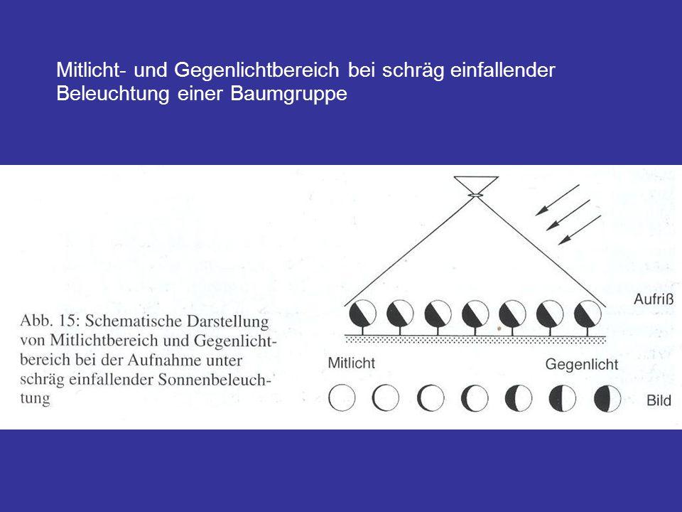 Mitlicht- und Gegenlichtbereich bei schräg einfallender Beleuchtung einer Baumgruppe