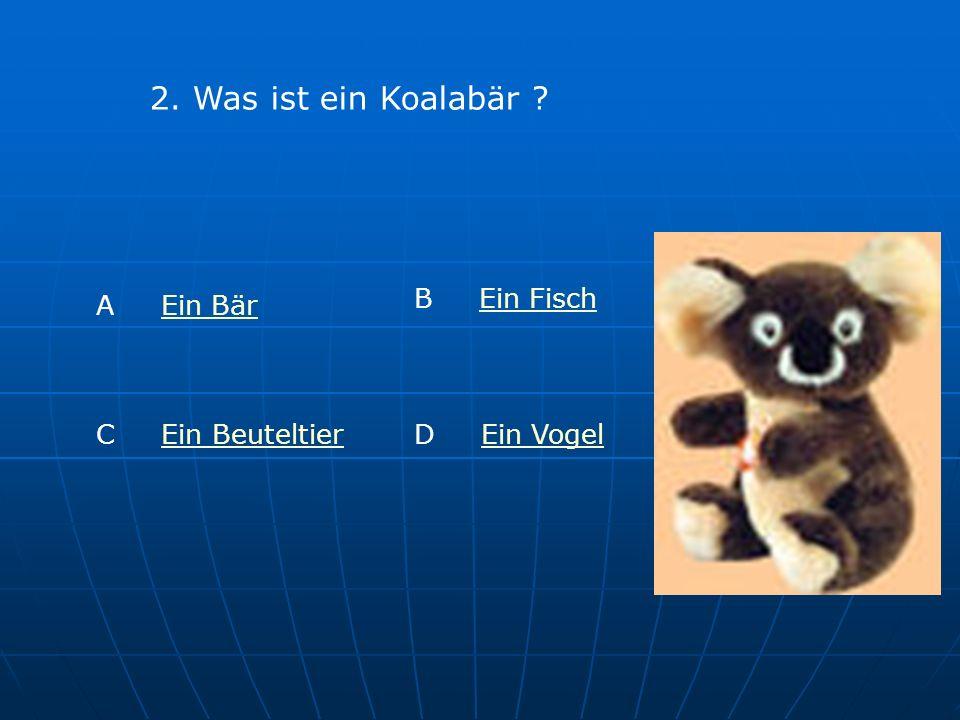 2. Was ist ein Koalabär ? A Ein BärEin Bär B Ein FischEin Fisch C Ein BeuteltierEin BeuteltierD Ein VogelEin Vogel