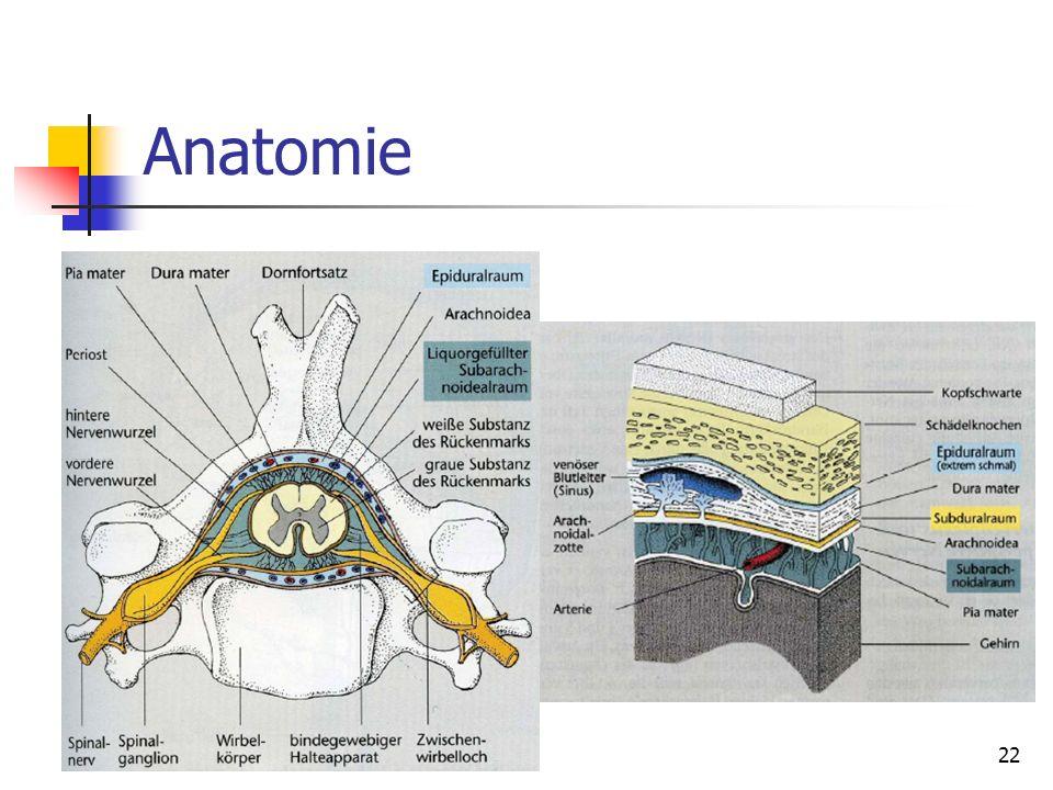 22 Anatomie 22