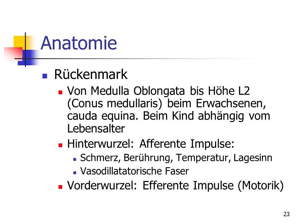 23 Anatomie Rückenmark Von Medulla Oblongata bis Höhe L2 (Conus medullaris) beim Erwachsenen, cauda equina. Beim Kind abhängig vom Lebensalter Hinterw