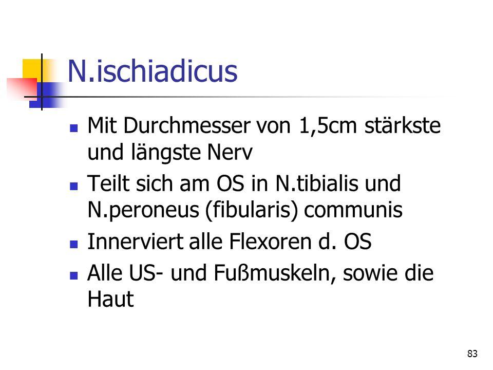N.ischiadicus Mit Durchmesser von 1,5cm stärkste und längste Nerv Teilt sich am OS in N.tibialis und N.peroneus (fibularis) communis Innerviert alle F