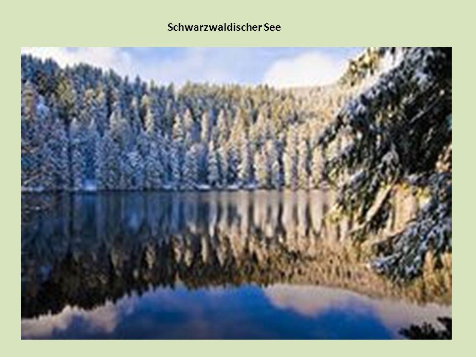 Schwarzwaldischer See