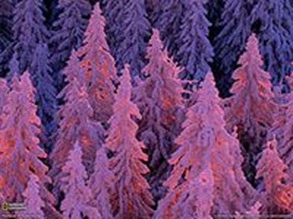 Der Schwarzwald ist Deutschlands höchstes und größtes zusammenhängendes Mittelgebirge und liegt im Südwesten Baden- Württembergs.
