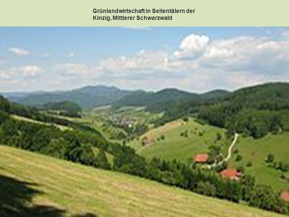 Mit 1493 m ist der Feldberg im Südschwarzwald der höchste Berggipfel.