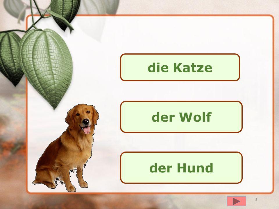 Übung 1 2 далее Kennt ihr die Tiere?