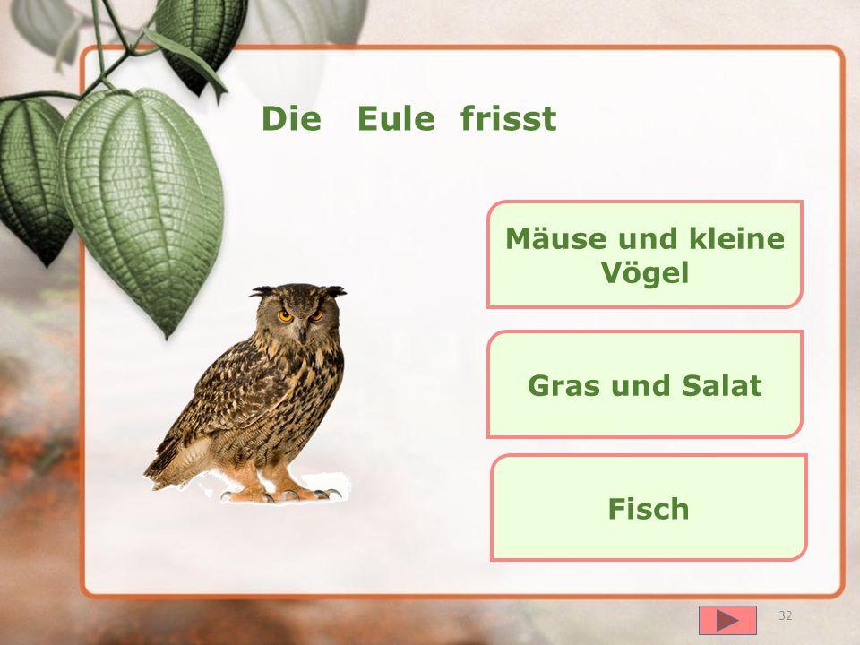 далее 31 Das Eichhörnchen frisst Haustiere und Hasen Salat Pilze und Nüsse