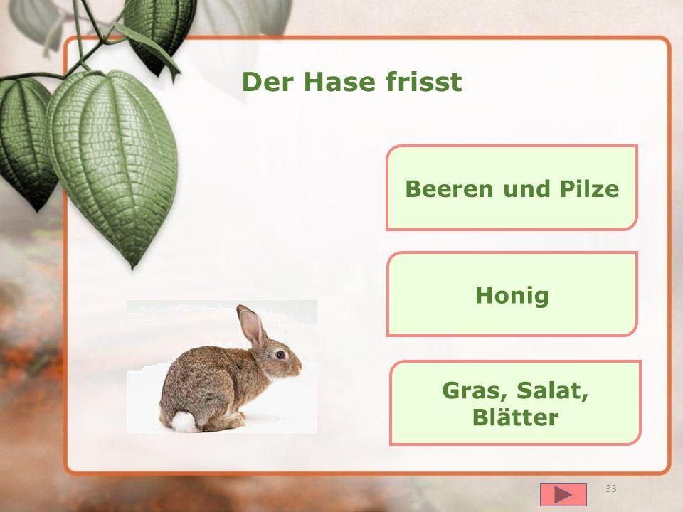 далее 32 Die Eule frisst Gras und Salat Mäuse und kleine Vögel Fisch