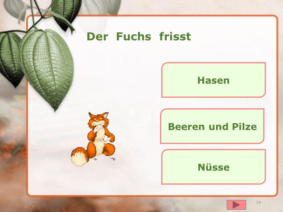 далее 33 Der Hase frisst Honig Beeren und Pilze Gras, Salat, Blätter