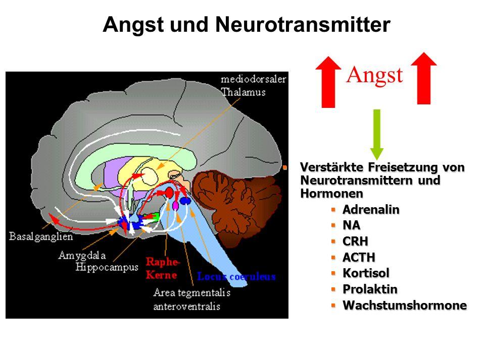  Verstärkte Freisetzung von Neurotransmittern und Hormonen  Adrenalin  NA  CRH  ACTH  Kortisol  Prolaktin  Wachstumshormone Angst und Neurotra