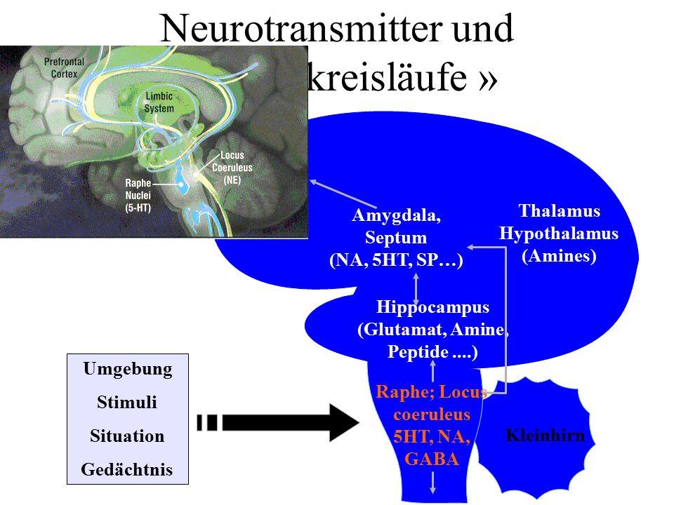 Neurotransmitter und « Angstkreisläufe » Umgebung Stimuli Situation Gedächtnis Frontal- lappen Amygdala, Septum (NA, 5HT, SP…) Thalamus Hypothalamus (