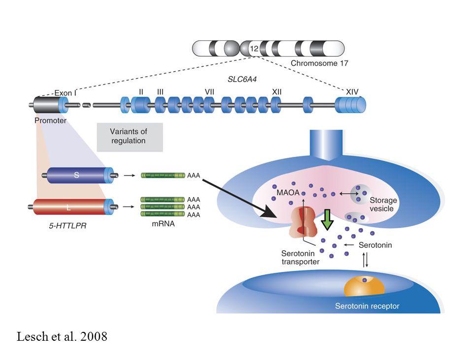 Lesch et al. 2008
