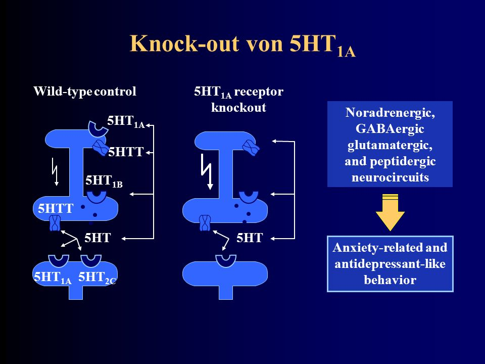 Knock-out von 5HT 1A Wild-type control Noradrenergic, GABAergic glutamatergic, and peptidergic neurocircuits Anxiety-related and antidepressant-like b