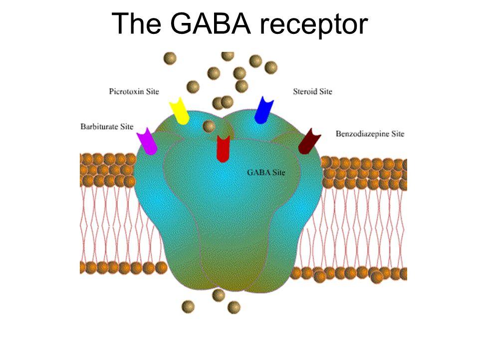 The GABA receptor
