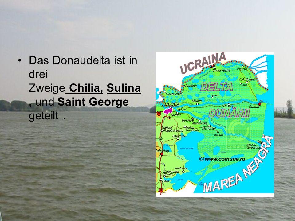 Das Donaudelta ist in drei Zweige Chilia, Sulina, und Saint George geteilt.
