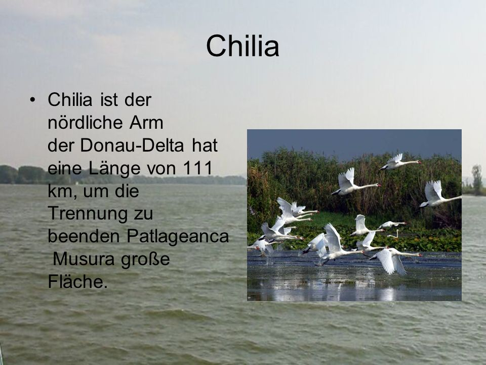 Chilia Chilia ist der nördliche Arm der Donau-Delta hat eine Länge von 111 km, um die Trennung zu beenden Patlageanca Musura große Fläche.