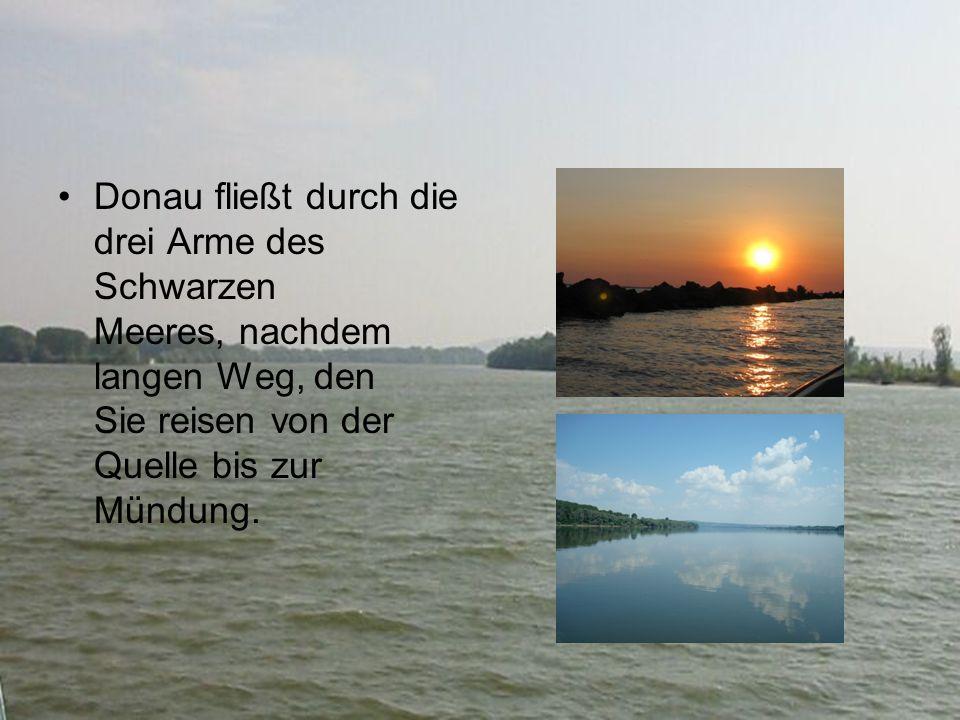 Donau fließt durch die drei Arme des Schwarzen Meeres, nachdem langen Weg, den Sie reisen von der Quelle bis zur Mündung.