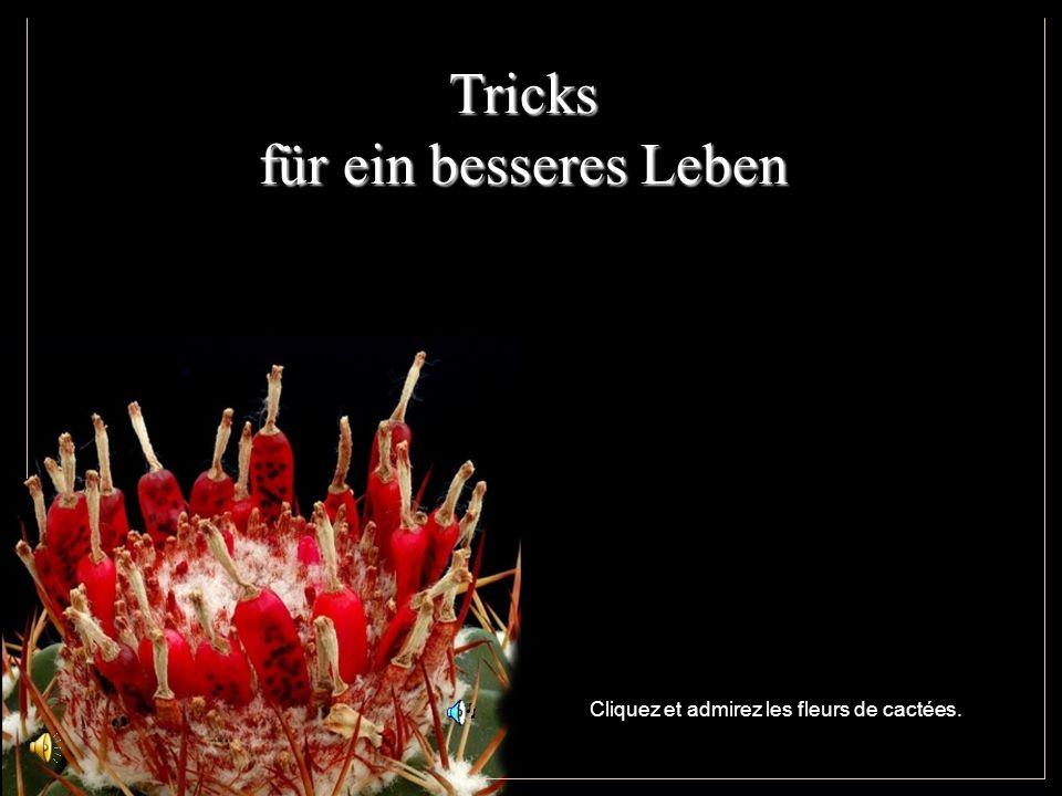 Tricks für ein besseres Leben Cliquez et admirez les fleurs de cactées.